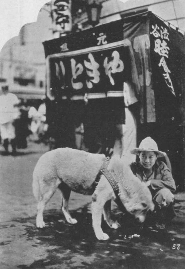 Những bức ảnh hiếm hoi về Hachikō - biểu tượng trung thành của người Nhật khiến người xem cảm tưởng câu chuyện đau lòng ấy đang diễn ra trước mắt - Ảnh 5.