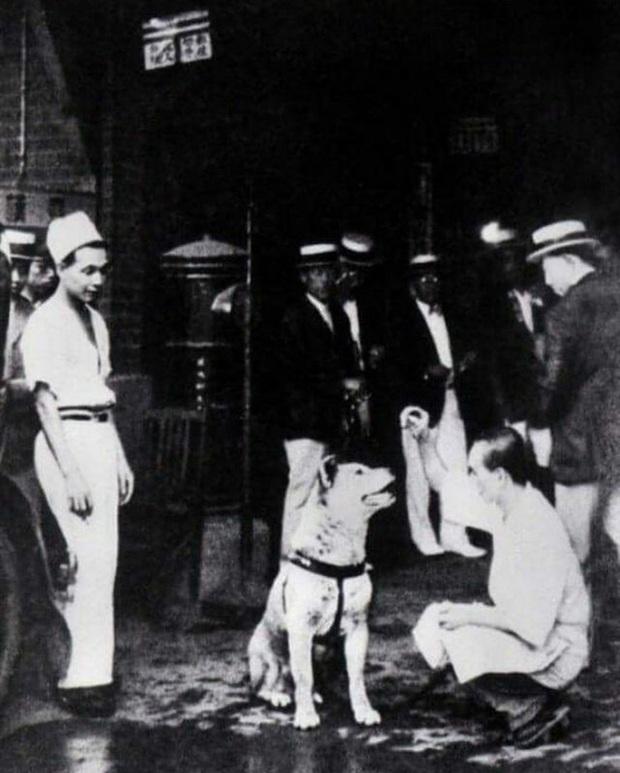 Những bức ảnh hiếm hoi về Hachikō - biểu tượng trung thành của người Nhật khiến người xem cảm tưởng câu chuyện đau lòng ấy đang diễn ra trước mắt - Ảnh 7.