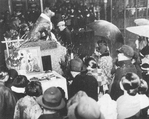 Những bức ảnh hiếm hoi về Hachikō - biểu tượng trung thành của người Nhật khiến người xem cảm tưởng câu chuyện đau lòng ấy đang diễn ra trước mắt - Ảnh 9.