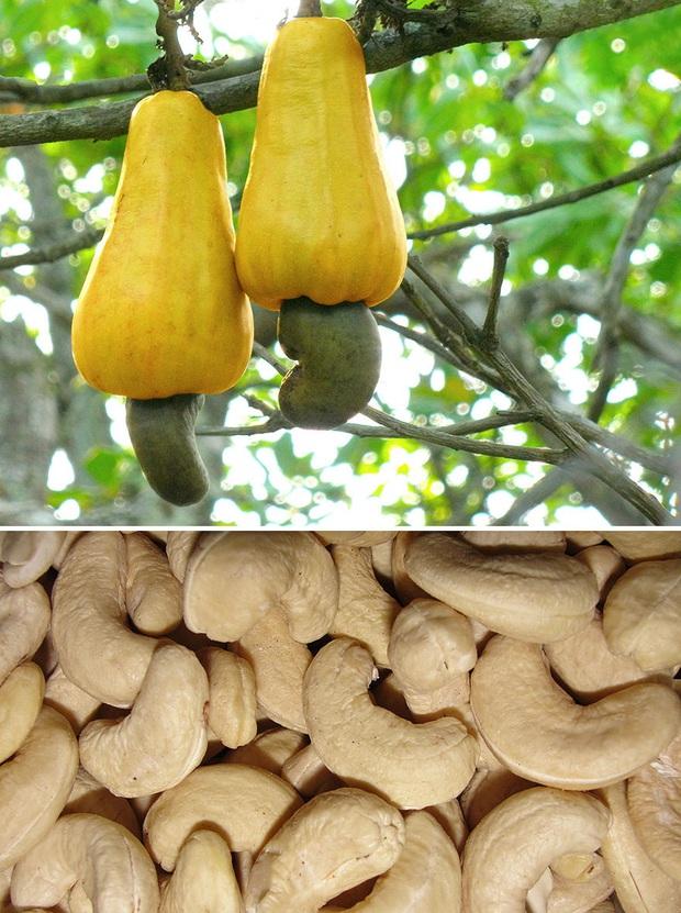 Ăn các loại thực phẩm này bấy lâu nay, bạn có biết chúng được trồng trọt và thu hoạch như thế nào không? (Phần 2) - Ảnh 14.