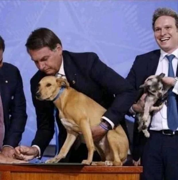 Chú chó số má nhất Brazil: Đại diện anh em bốn chân cả nước đi kí bộ luật cấm ngược đãi động vật với Tổng thống - Ảnh 2.