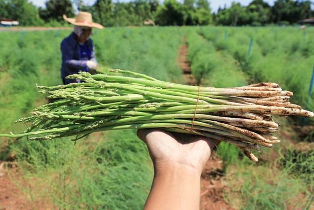 Ăn các loại thực phẩm này bấy lâu nay, bạn có biết chúng được trồng trọt và thu hoạch như thế nào không? (Phần 2) - Ảnh 21.