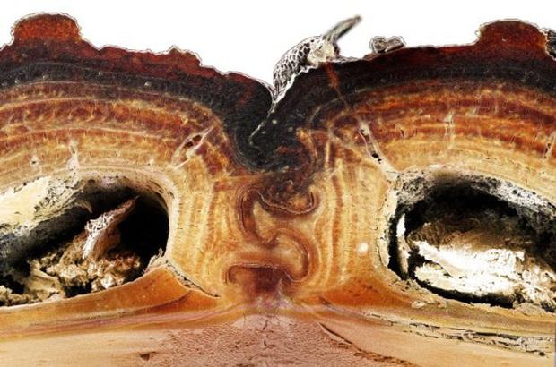 Đây là loài bọ mình đồng da sắt của thế giới tự nhiên, ô tô 1,6 tấn cán không chết - Ảnh 2.