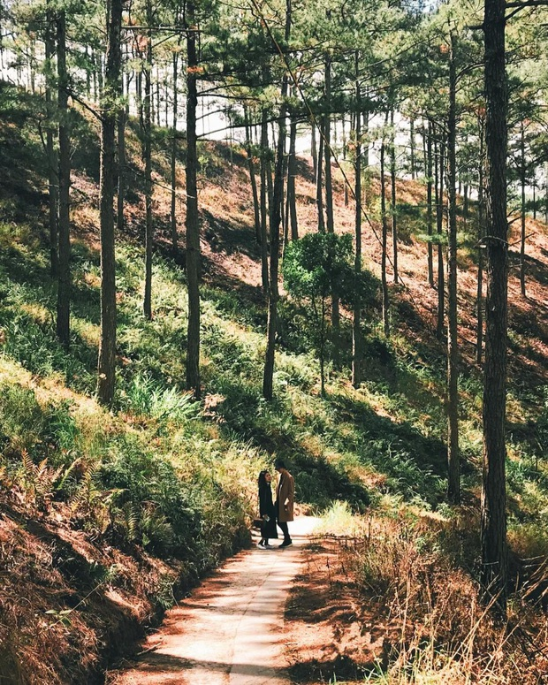 """Dalat has 4 cafes in the style of """"chill spread"""" that are very rare to know: Located in the middle of a pine forest, every corner of the street is beautiful - Photo 6."""