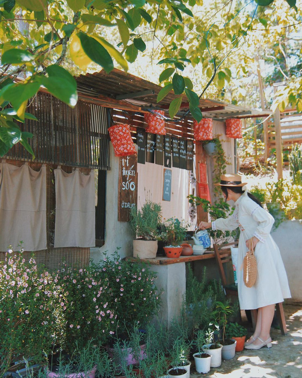 """Dalat has 4 """"chill spread"""" cafes that are very rare to know: Located in the middle of a pine forest, every corner of the street is beautiful - Photo 11."""