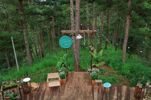 """Dalat has 4 """"chill spread"""" cafes that are very rare to know: Located in the middle of a pine forest, every corner of the street is beautiful - Photo 18."""