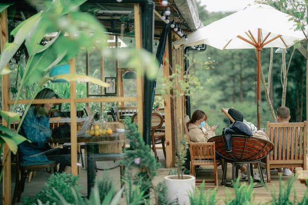 """Dalat has 4 """"chill spread"""" cafes that are very rare to know: Located in the middle of a pine forest, every corner of the street is beautiful - Photo 31."""