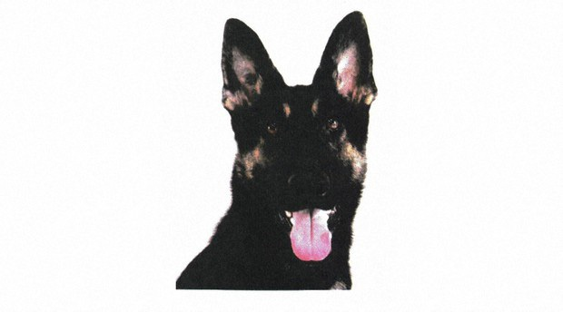 Chó nghiệp vụ mất tích khi đang tìm kiếm người mất tích, sở cảnh sát phải điều thêm 35 người đi tìm nó - Ảnh 1.