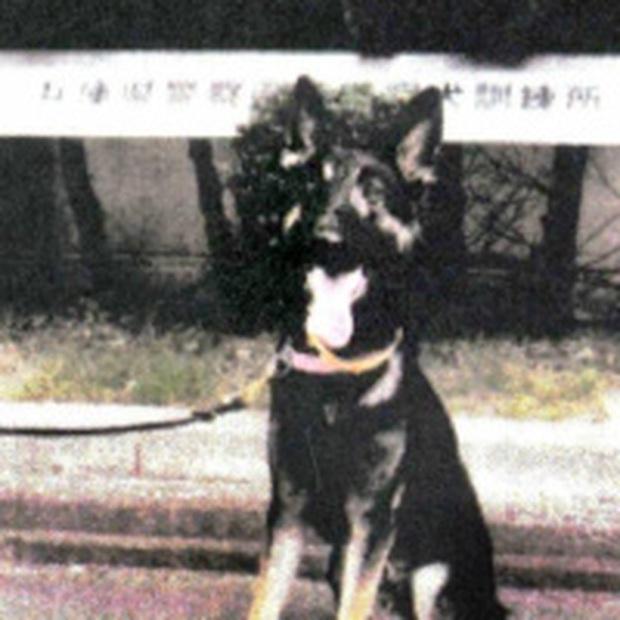Chó nghiệp vụ mất tích khi đang tìm kiếm người mất tích, sở cảnh sát phải điều thêm 35 người đi tìm nó - Ảnh 3.