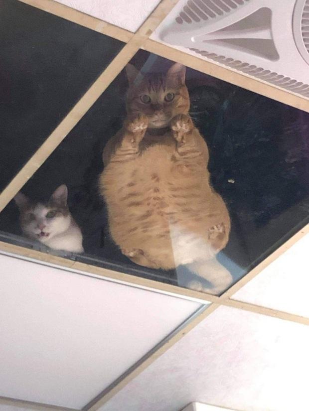Thương lũ mèo không ai trông, chủ gắn kính lên gác xép dõi theo các con vật nhưng nhận lại kết quả khiến nhiều người sởn tóc gáy - Ảnh 3.