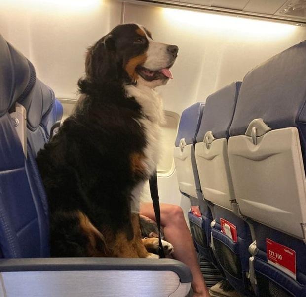 Những phép lịch sự tối thiểu khi đi máy bay mà nhiều người trong chúng ta đã không hay biết, theo chia sẻ của các tiếp viên hàng không - Ảnh 4.