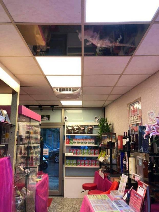Thương lũ mèo không ai trông, chủ gắn kính lên gác xép dõi theo các con vật nhưng nhận lại kết quả khiến nhiều người sởn tóc gáy - Ảnh 1.