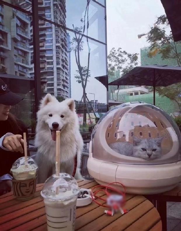 Starbucks tặng 1 ly nước free cho khách dắt theo thú cưng, có người mang cả cua biển tới để nhận quà - Ảnh 1.