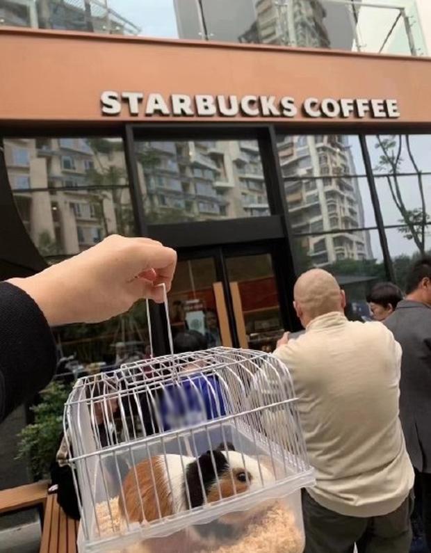 Starbucks tặng 1 ly nước free cho khách dắt theo thú cưng, có người mang cả cua biển tới để nhận quà - Ảnh 2.