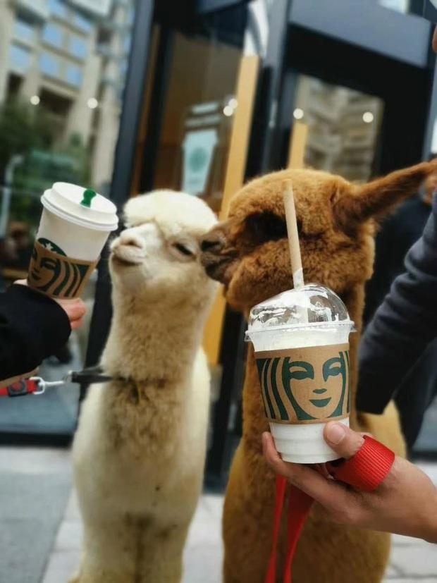 Starbucks tặng 1 ly nước free cho khách dắt theo thú cưng, có người mang cả cua biển tới để nhận quà - Ảnh 4.