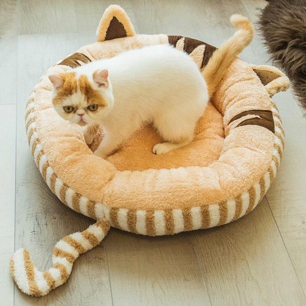 Cẩm nang sắm đồ basic cho các sen lần đầu nuôi mèo, đảm bảo boss ưng hết cỡ - Ảnh 12.