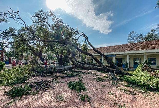 Trường học ở Bình Định tan hoang sau bão số 9, giáo viên vất vả dọn dẹp để chuẩn bị đón học sinh trở lại - Ảnh 2.