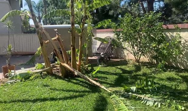 Thanh Thảo xót xa hé lộ khung cảnh vườn nhà ở Mỹ hoang tàn do ảnh hưởng của gió lớn và cháy rừng - Ảnh 3.