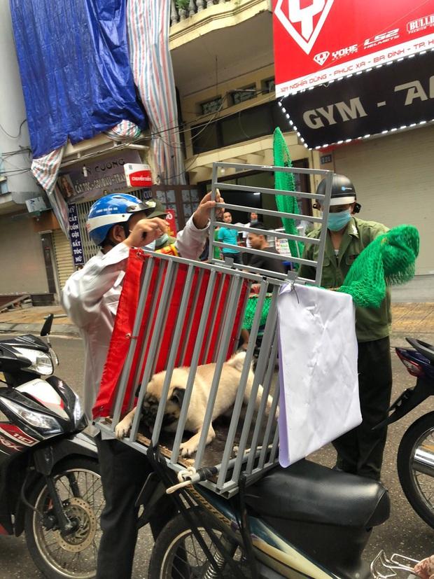 Hà Nội: Thành lập tổ phản ứng nhanh truy bắt chó thả rông nơi công cộng - Ảnh 5.