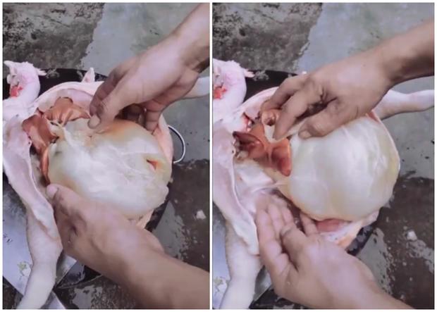 Sống mấy chục năm cuộc đời, hàng vạn người hú hồn vì lần đầu tiên gặp con gà có vật thể lạ núng nính trong bụng - Ảnh 2.