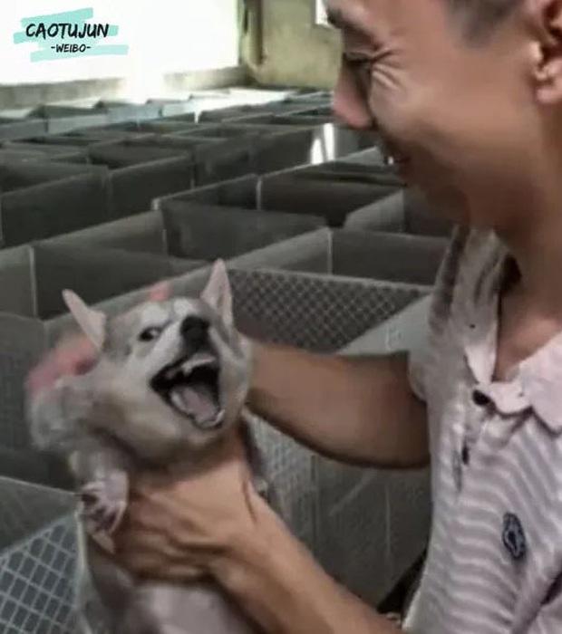 Bộ ảnh chú Husky mặt ngáo phối giống với cả thế giới khiến người xem thấy sai vô cùng - Ảnh 3.
