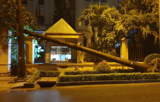 Mưa to gió lớn như bão, hàng chục cây xanh bật gốc ở Sài Gòn  - Ảnh 4.