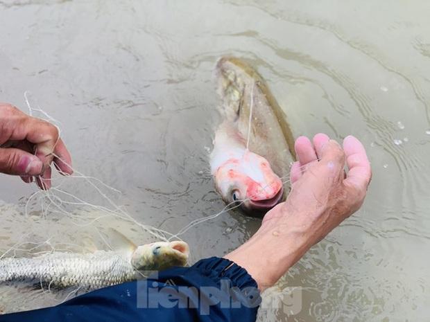 Hàng chục người bất chấp hồ xả lũ vẫn săn bắt cá dưới dòng nước xiết - Ảnh 15.