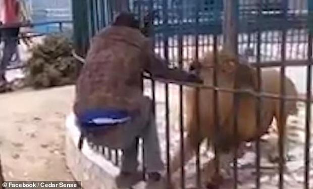 Thò tay vào lồng chơi với sư tử để gây ấn tượng với du khách, nhân viên sở thú gặp tai nạn khiến người chứng kiến hãi hùng - Ảnh 1.
