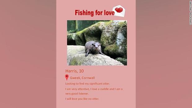 Chú rái cá tìm được real love qua web hẹn hò khiến anh em loài người ghen tị cực độ - Ảnh 2.