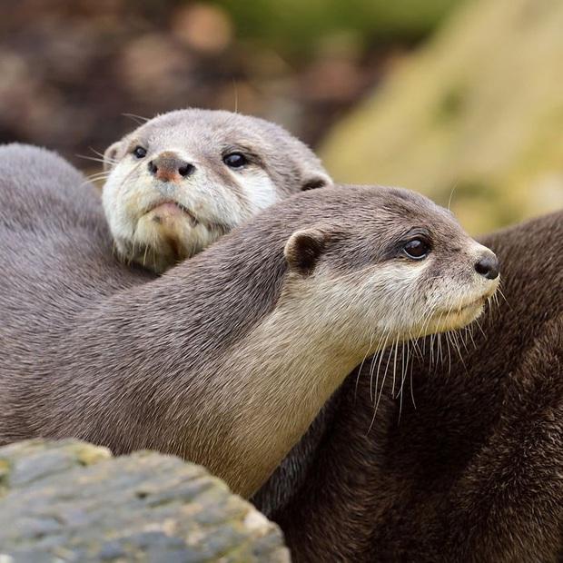 Chú rái cá tìm được real love qua web hẹn hò khiến anh em loài người ghen tị cực độ - Ảnh 4.