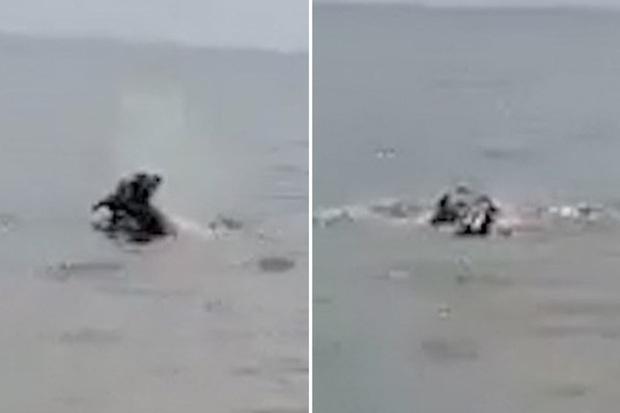 Mải chơi ở bờ biển, cậu bé bất ngờ bị quái vật chồm lên kéo xuống nước, người lớn bất lực gào thét trong lúc chứng kiến cảnh tượng ám ảnh - Ảnh 2.