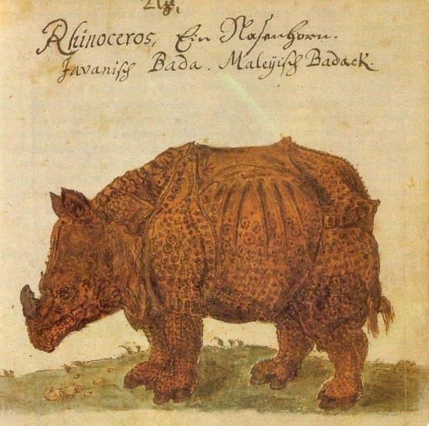 Khi họa sĩ thời Trung Cổ trổ tài vẽ lại động vật qua lời kể, con nào cũng sai trái hết hồn luôn - Ảnh 14.
