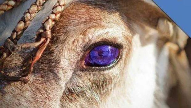 Những loài động vật nhìn thoáng qua có vẻ đáng sợ nhưng khi nhìn kỹ thì chúng lại đẹp mê hồn - Ảnh 2.