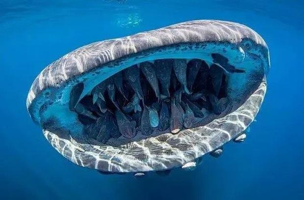 Những loài động vật nhìn thoáng qua có vẻ đáng sợ nhưng khi nhìn kỹ thì chúng lại đẹp mê hồn - Ảnh 3.