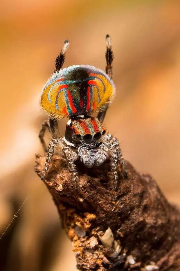 Những loài động vật nhìn thoáng qua có vẻ đáng sợ nhưng khi nhìn kỹ thì chúng lại đẹp mê hồn - Ảnh 8.