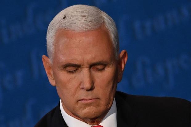 Vỉ đập ruồi của chiến dịch Biden cháy hàng sau sự cố ruồi đậu lên đầu Phó tổng thống Mỹ Mike Pence - Ảnh 2.