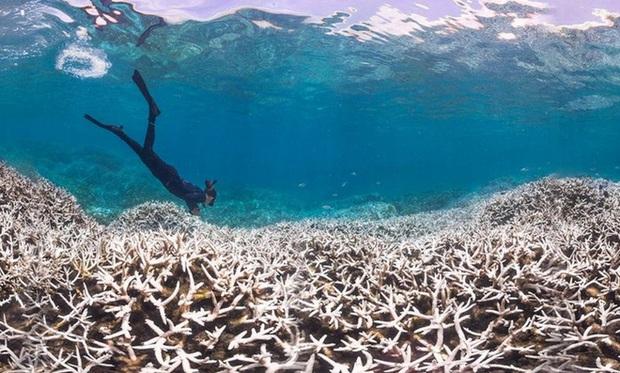 Đại dương đang giống như một chiếc bánh nhiều lớp và điều này quả thực nguy hiểm với toàn bộ hệ sinh thái - Ảnh 2.