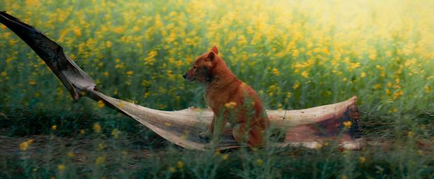 Đăng ảnh Shiba kèm lời nhắn cục Vàng của Lão Hạc, ekip Cậu Vàng ngầm xác nhận dùng chó Nhật trong phim? - Ảnh 4.