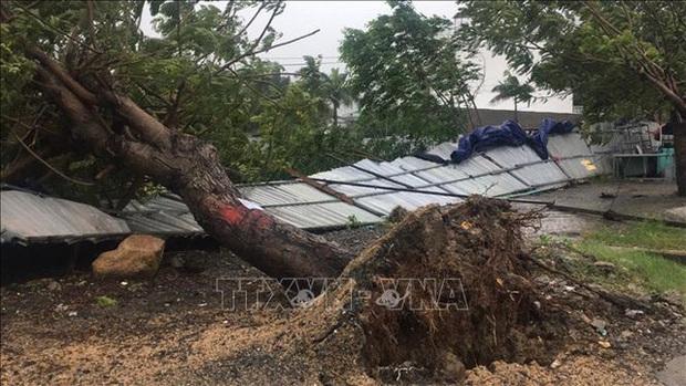 Hình ảnh bão số 12 đổ bộ: Mưa lớn, gió thổi mạnh quật đổ cây xanh - Ảnh 5.