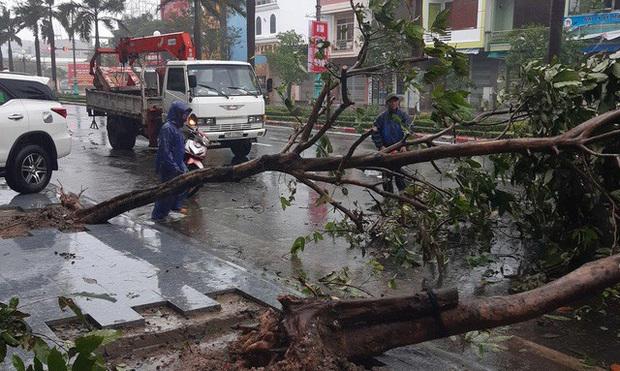 Hình ảnh bão số 12 đổ bộ: Mưa lớn, gió thổi mạnh quật đổ cây xanh - Ảnh 7.