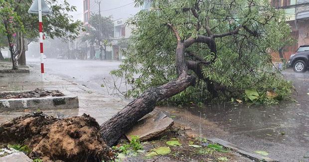 Hình ảnh bão số 12 đổ bộ: Mưa lớn, gió thổi mạnh quật đổ cây xanh - Ảnh 8.