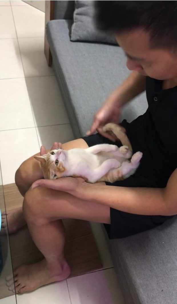 """Clip: Ông nội hướng dẫn tắm cho trẻ sơ sinh, biểu cảm của """"diễn viên đóng thế"""" mèo con mới gây sốt cộng đồng mạng - Ảnh 3."""