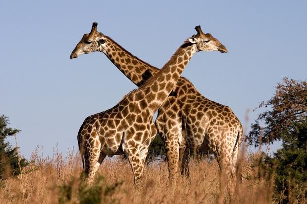 Những hoạt động giúp các loài động vật duy trì nòi giống - Ảnh 2.