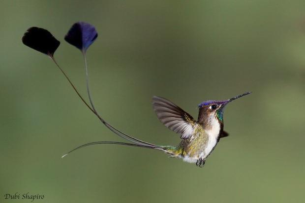Những hoạt động giúp các loài động vật duy trì nòi giống - Ảnh 6.