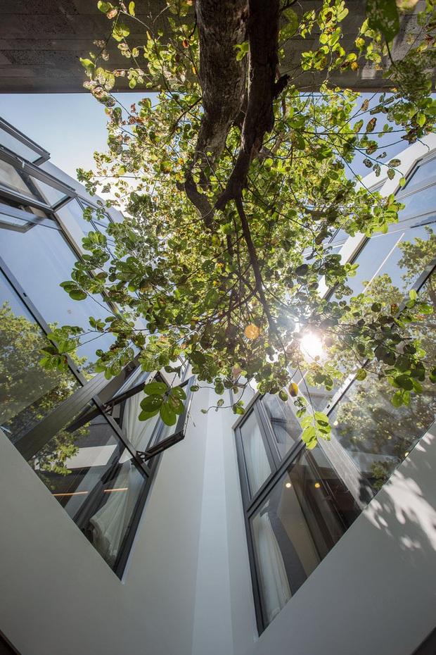 Nằm sâu trong con ngõ nhỏ Hội An, ngôi nhà vẫn ngập tràn nắng gió bởi tư duy thiết kế khoa học của kiến trúc sư - Ảnh 8.