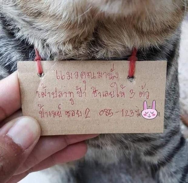 Góc con dại cái mang: Chú mèo bỏ nhà đi bụi 3 ngày, khi trở về mang theo món nợ khiến chủ nhân dở khóc dở cười - Ảnh 2.