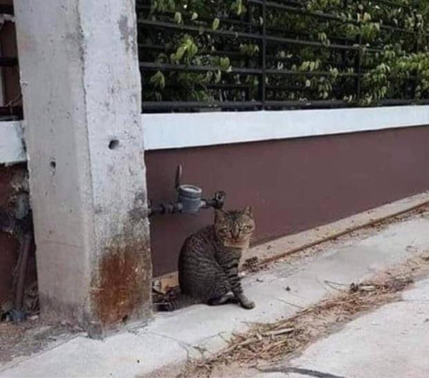 Góc con dại cái mang: Chú mèo bỏ nhà đi bụi 3 ngày, khi trở về mang theo món nợ khiến chủ nhân dở khóc dở cười - Ảnh 3.