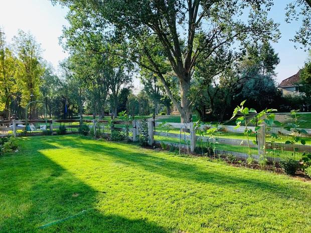 Vợ chồng trẻ liều mua trả góp 30 năm, có được căn nhà vườn 560m2 đầy ưng ý, bí quyết cực kỳ đơn giản - Ảnh 14.