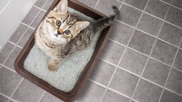 6 loại cát vệ sinh cho mèo giá chỉ từ 50k đảm bảo chuẩn ý boss - Ảnh 3.