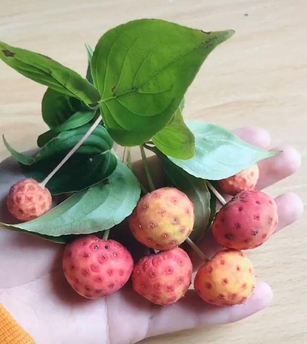 Xuất hiện loại quả lạ, ăn thử thấy ngon nhưng hỏi cư dân mạng thì không ai biết đó là quả gì - Ảnh 2.